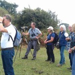 Looking for the spotted flycatcher
